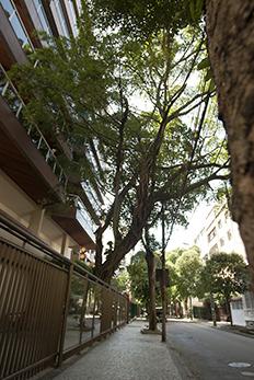 urban-nature-3